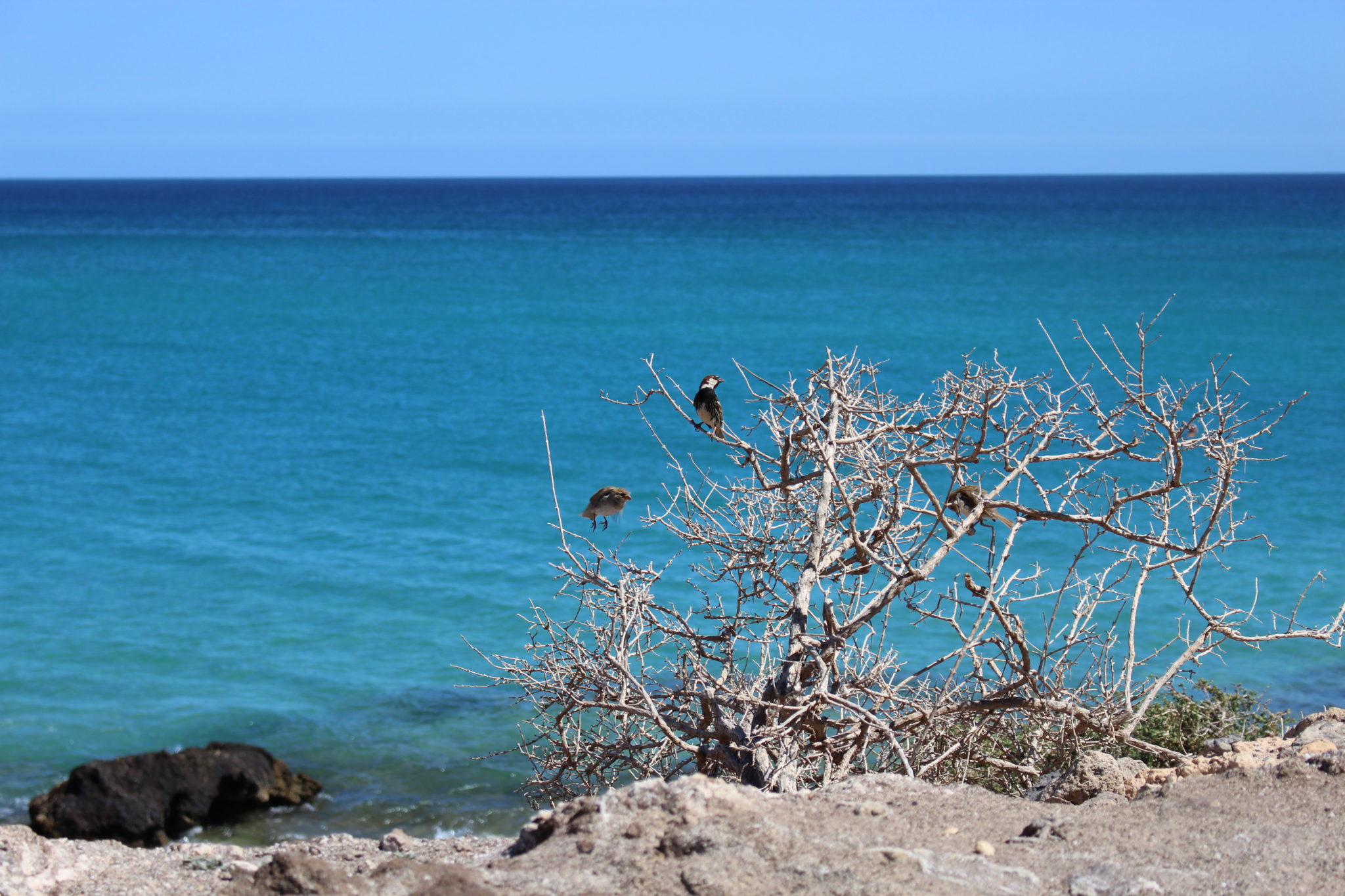 W poszukiwaniu Plaży Sotavento