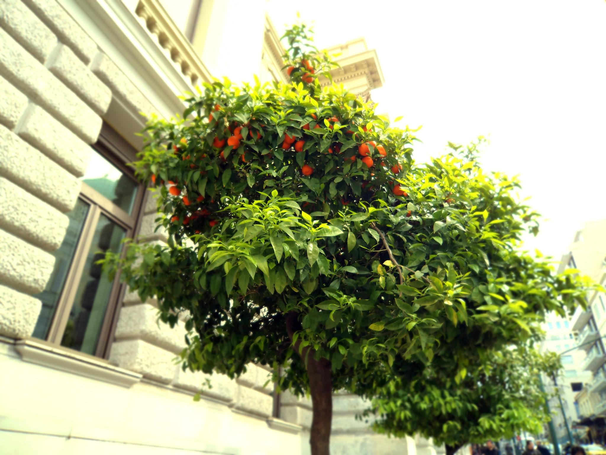 Grecka kuchnia pomarańcze