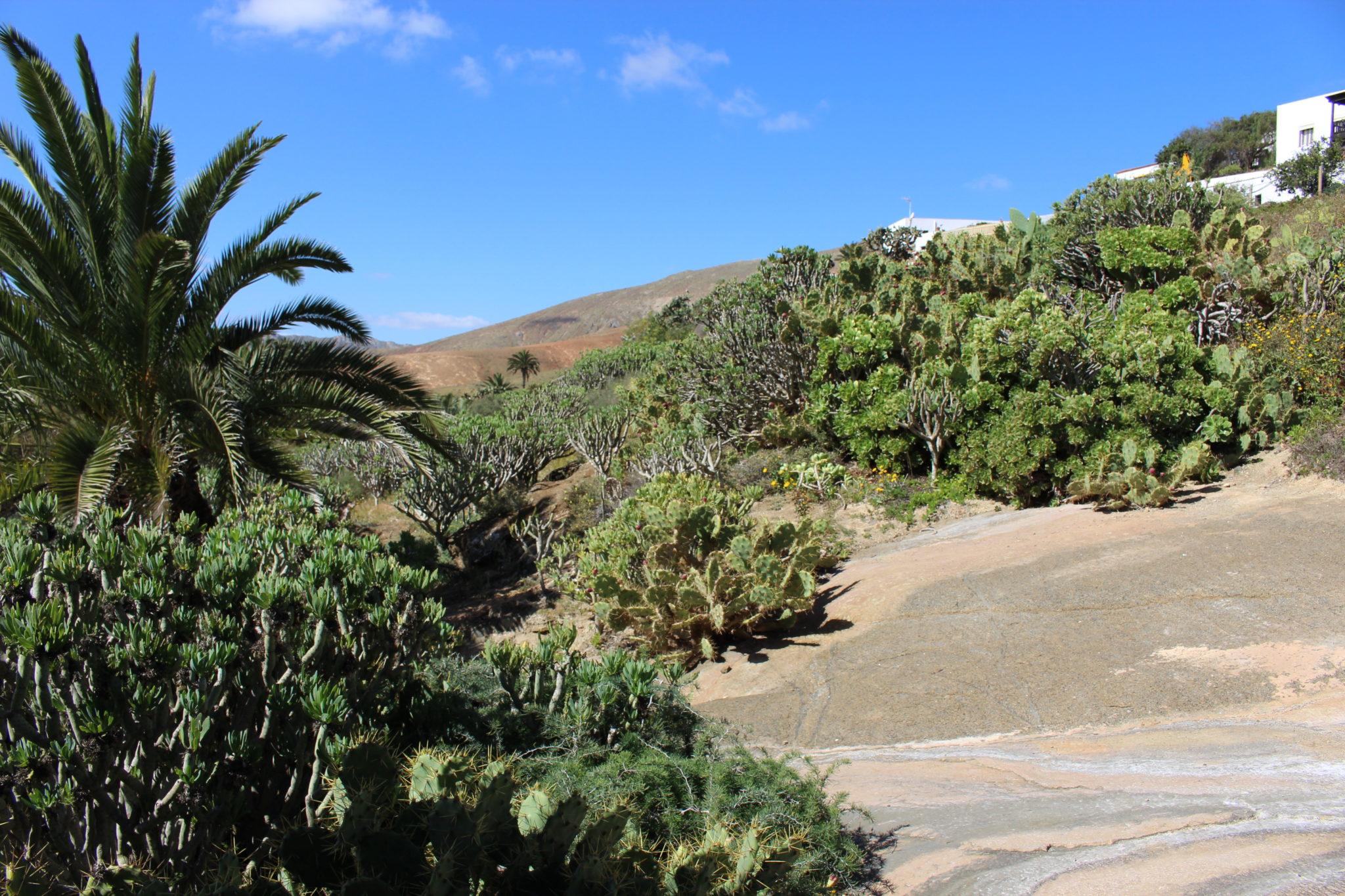 Betancuria landscape