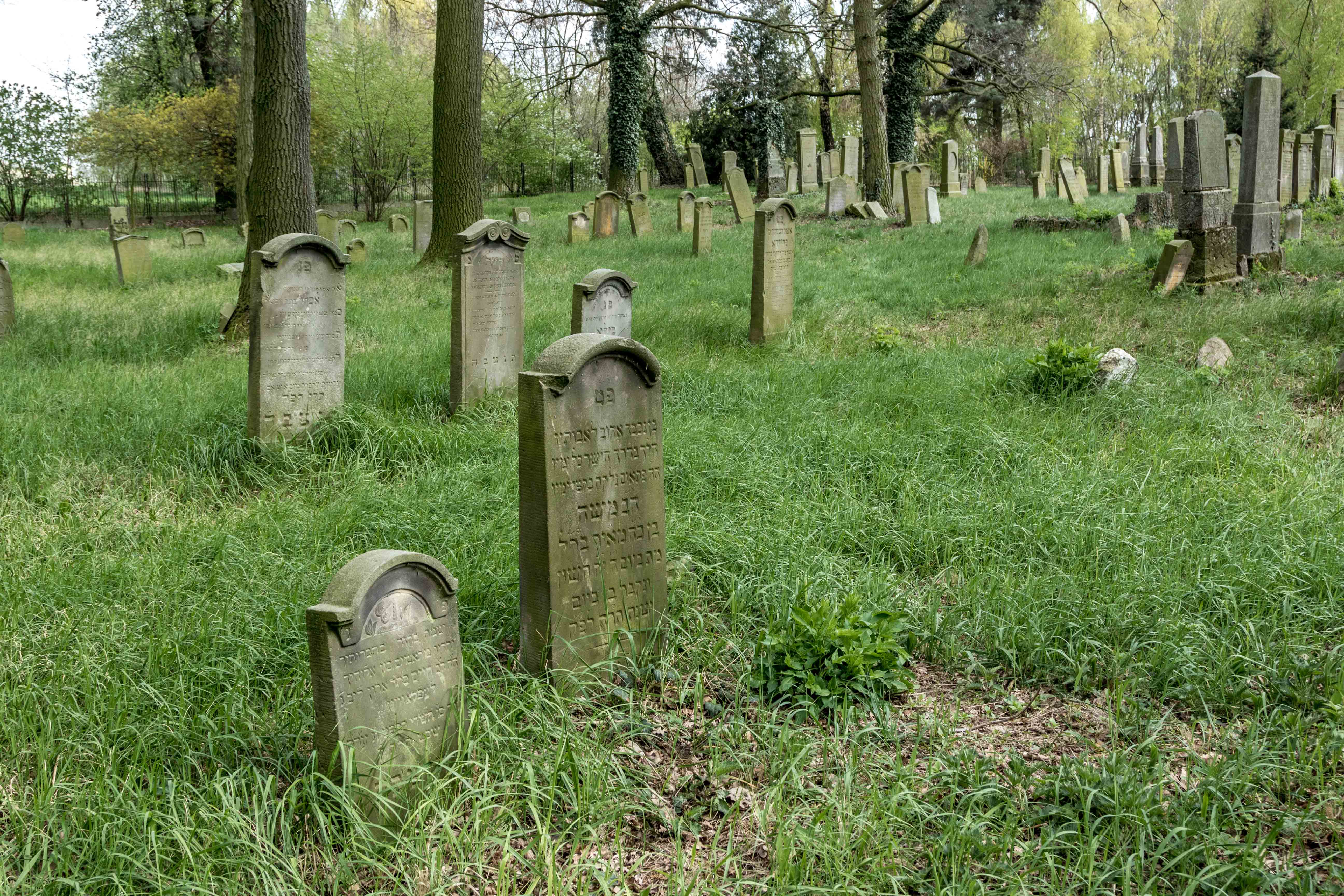 Cmentarz żydowski w Koźminie Wielkopolskim