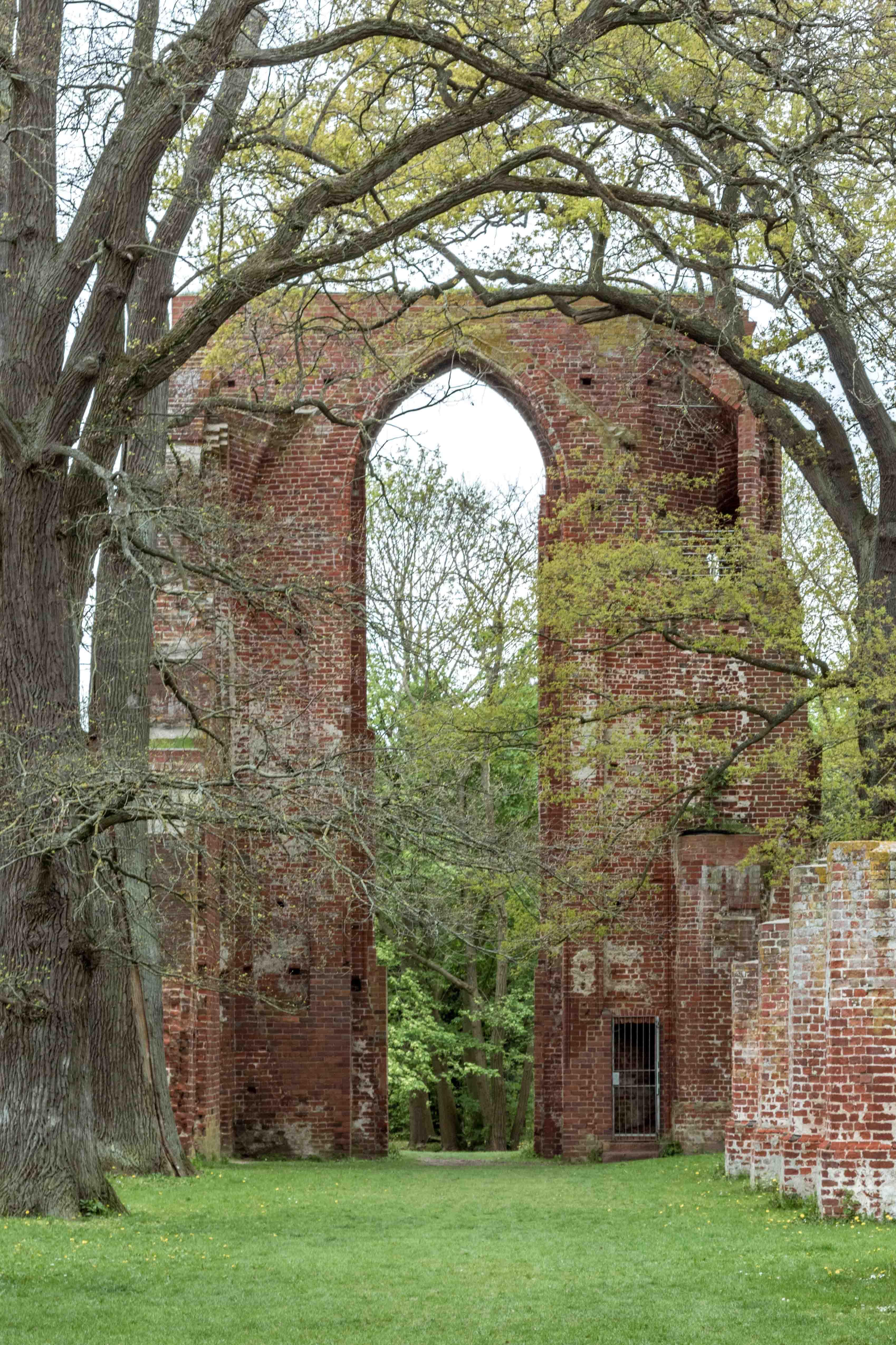 Ruiny klasztoru z Opactwa w dębowym lesie