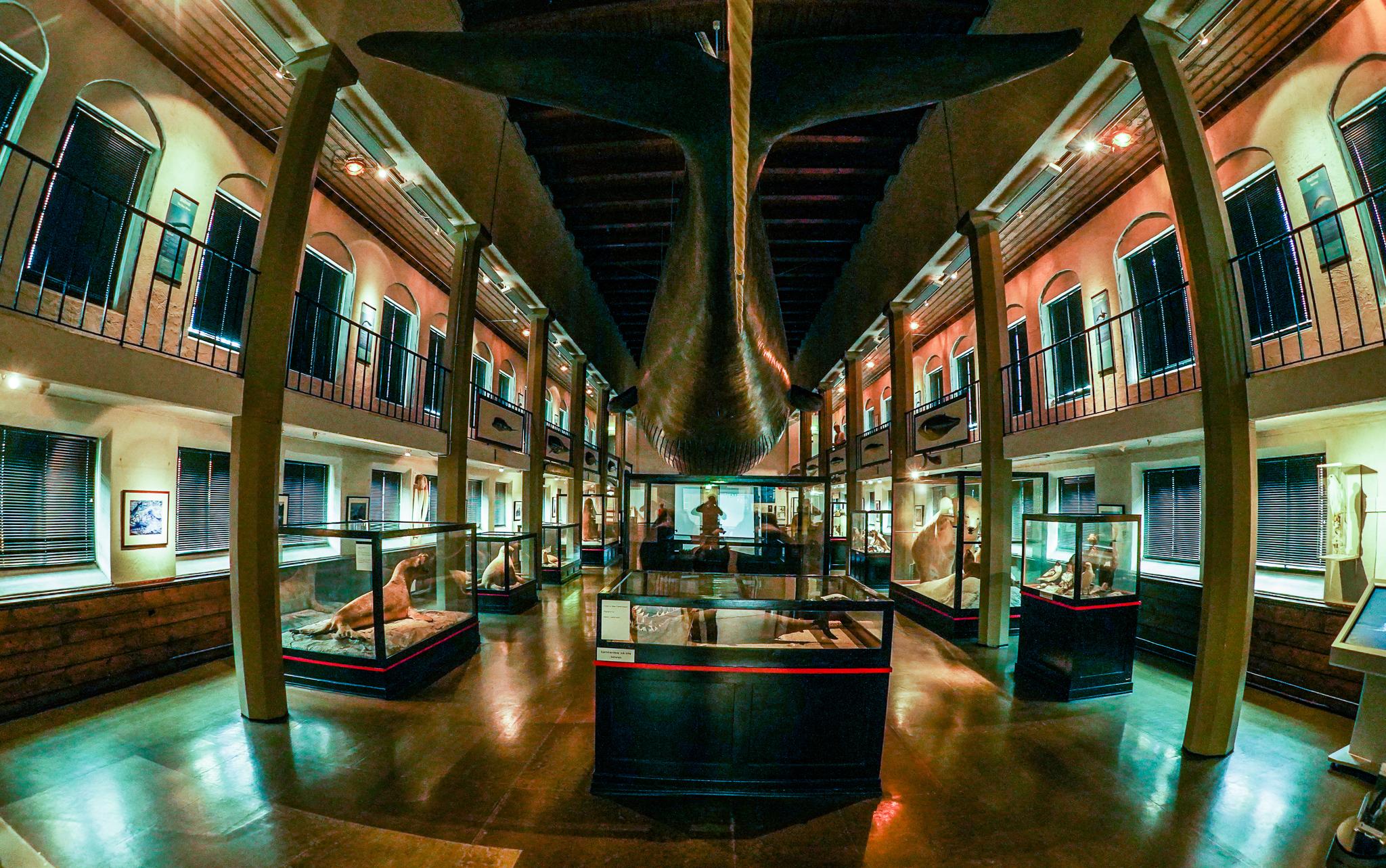 Muzeum wielorybnictwa w Sandefjord