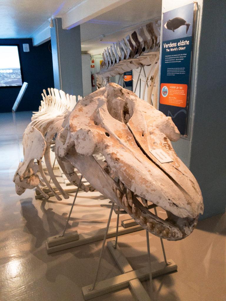 muzeum wielorybnictwa